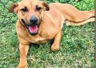 P.A.W.S. Pets of the week