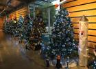 Nostalgic Christmas Tree Forest, Annual Tradition at the IMAS
